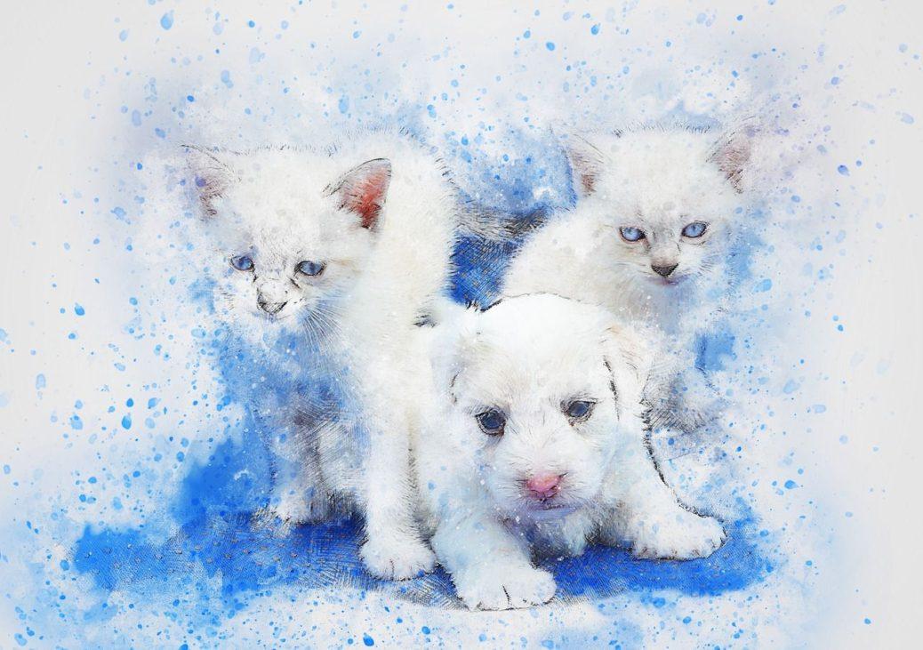 tes-vous plutôt chien ou chat? Ils possèdent chacun une profonde signification spirituelle