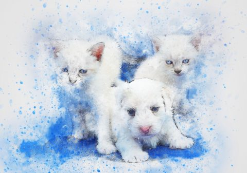 Êtes-vous plutôt chien ou chat? Ils possèdent chacun une profonde signification spirituelle