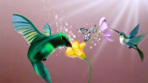 Le colibri possède une signification spirituelle importante selon plusieurs légendes