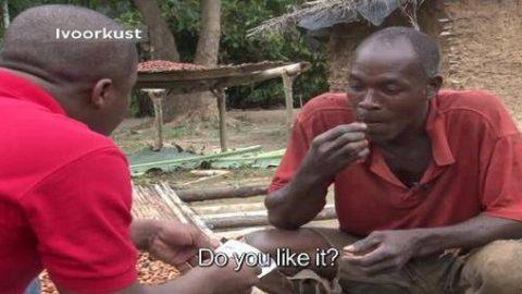 Cacao: il en cultive depuis des années, mais n'a jamais vu de chocolat