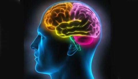 Comment le cerveau détecte le mensonge ?