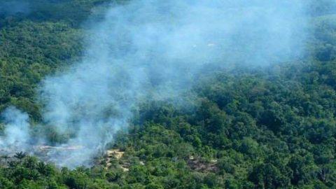 L'Amazonie – Poumon De L'Ascension